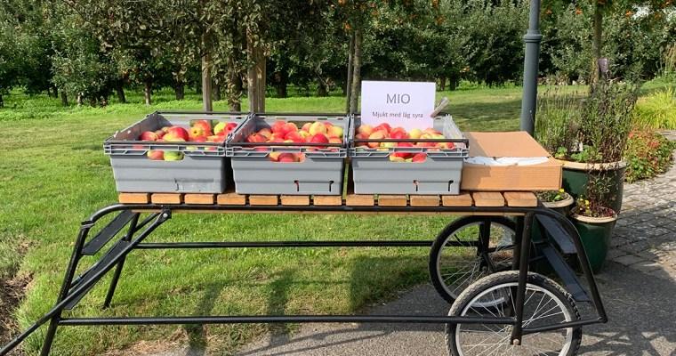 Fruktförsäljning i höstsolen
