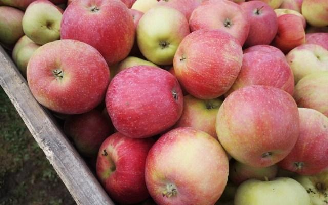 Öppet alla dagar under äpplets högsäsong