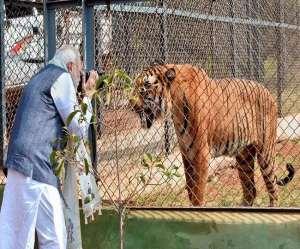 International Tiger Day 2021: