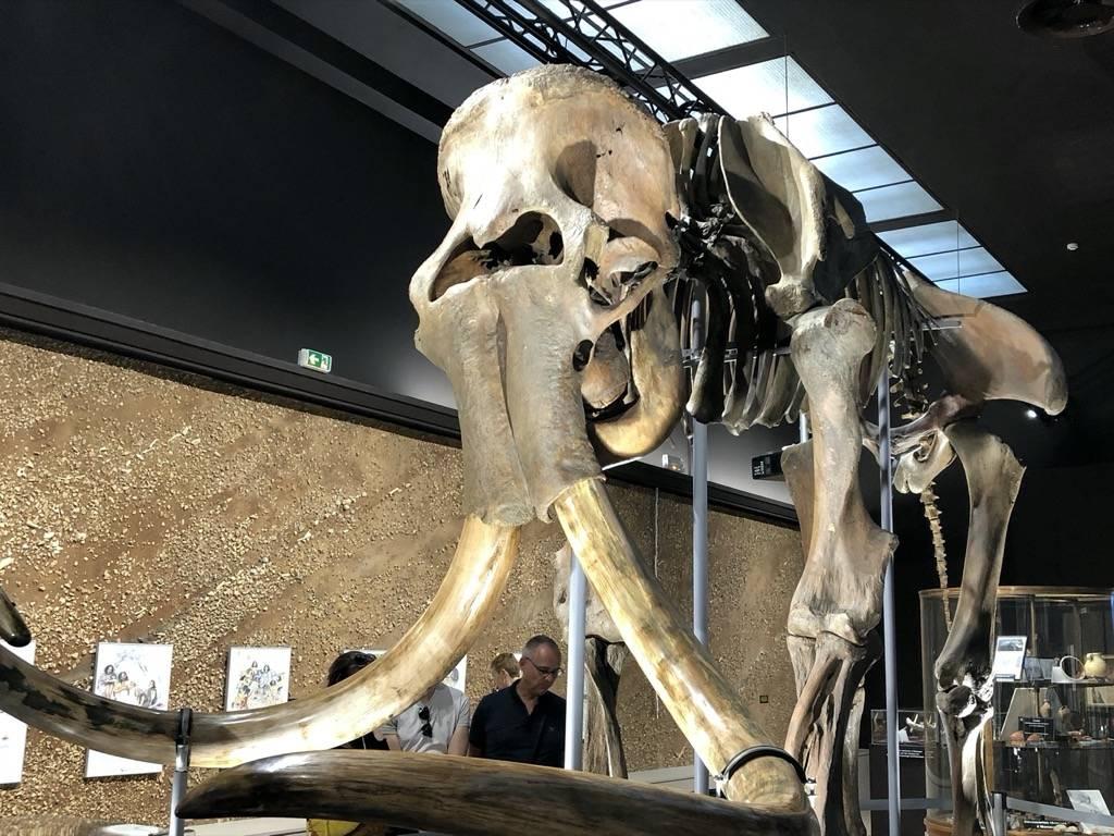 Les Prochains Événements du Musée d'Anthropologie