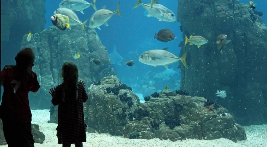 Les Zoos, Les Aquariums, Les Parcs Nationaux du Monde Entier « Unis Pour La Biodiversité »