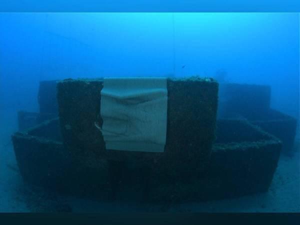 Des nichoirs futuristes développent la biodiversité marine