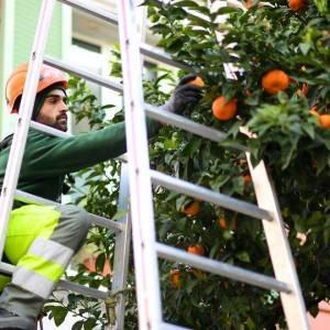 Demandez vos oranges amères !