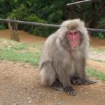 Our Thoughts On Monkey Park Iwatayama