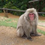Our Thoughts On Monkey Park Iwatayama