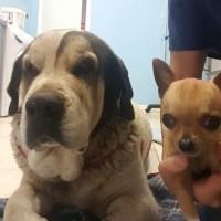 clinca veterinaria perros gran canaria