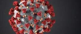 कोरोना भाइरस संक्रमणका कारण विश्वभर मृत्यु हुनेको संख्या २ लाख बढि