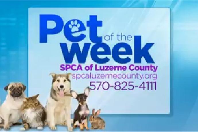 Luzerne County SPCA_-7285167480288883615