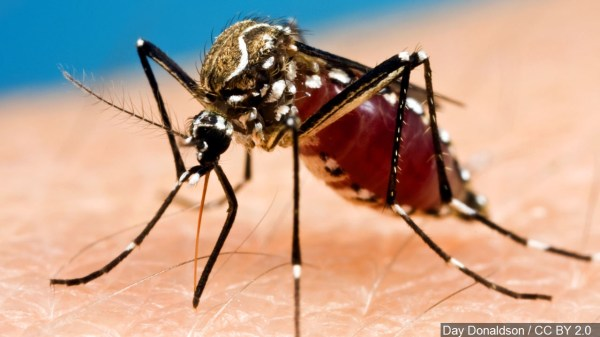 Rare mosquito-transmitted viral infection confirmed in three counties