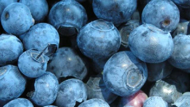 Cold Foods - Blueberries_2421925659803579-159532