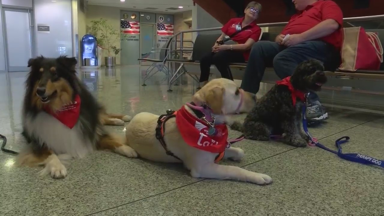 Airport_therapy_dogs_0_20190531225259