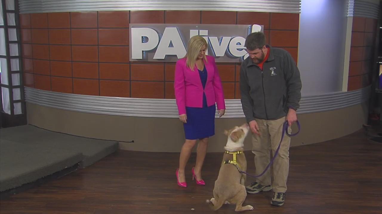 PAlive! SPCA Feature Pet February 27, 2020