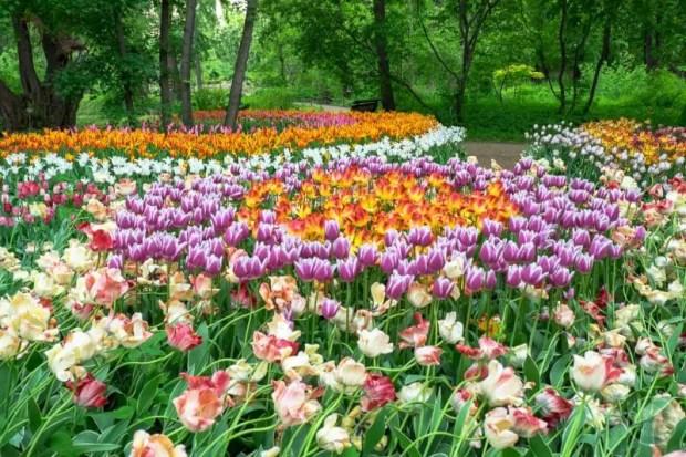 Aptekarskiy Ogorod Giardino Botanico Mosca