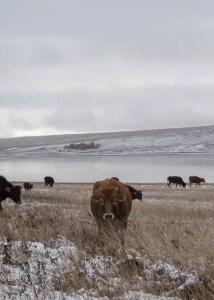 Diari dall'Azerbaijan. Di (s)confini, uomini e i loro limiti