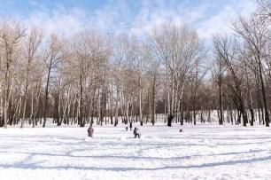 I boschi di Babij Jar