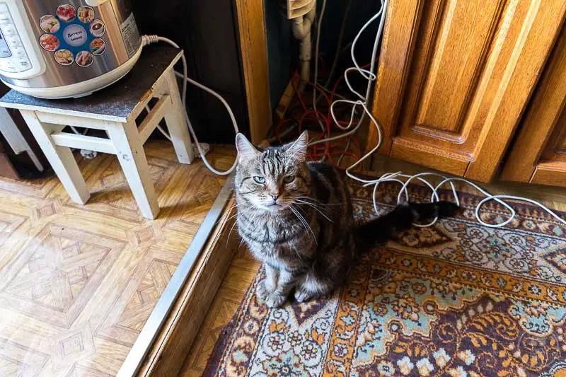 Un gatto transnistriano, Rybnitsa