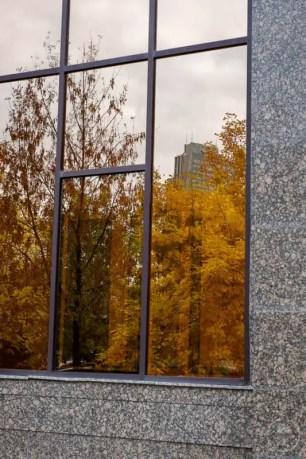 Foliage riflesso nei vetri dei grattacieli