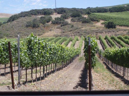 Foley's  vineyards