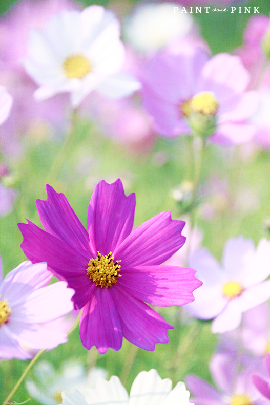 Field-Of-Cosmos