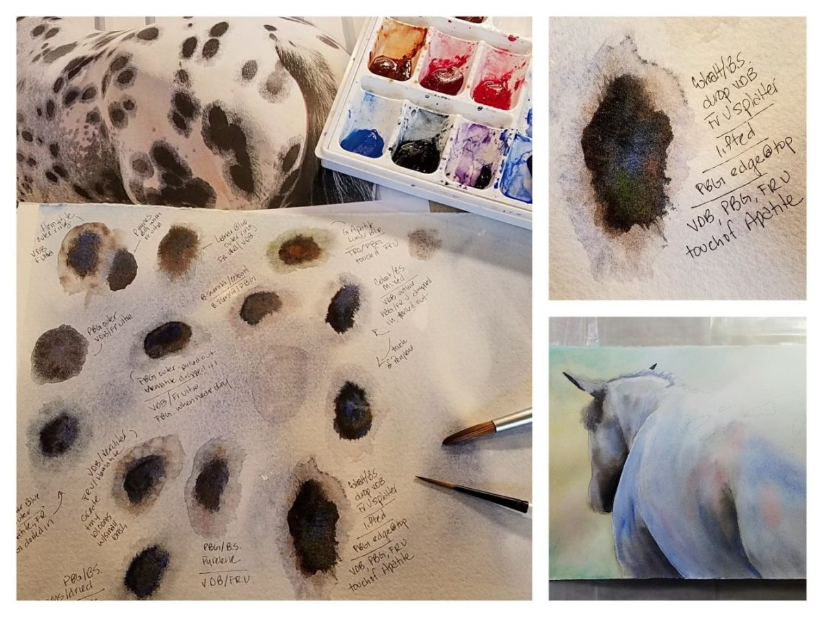 Experimenting with an Appaloosa's spots