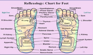 Where to apply oils foot reflexology chart