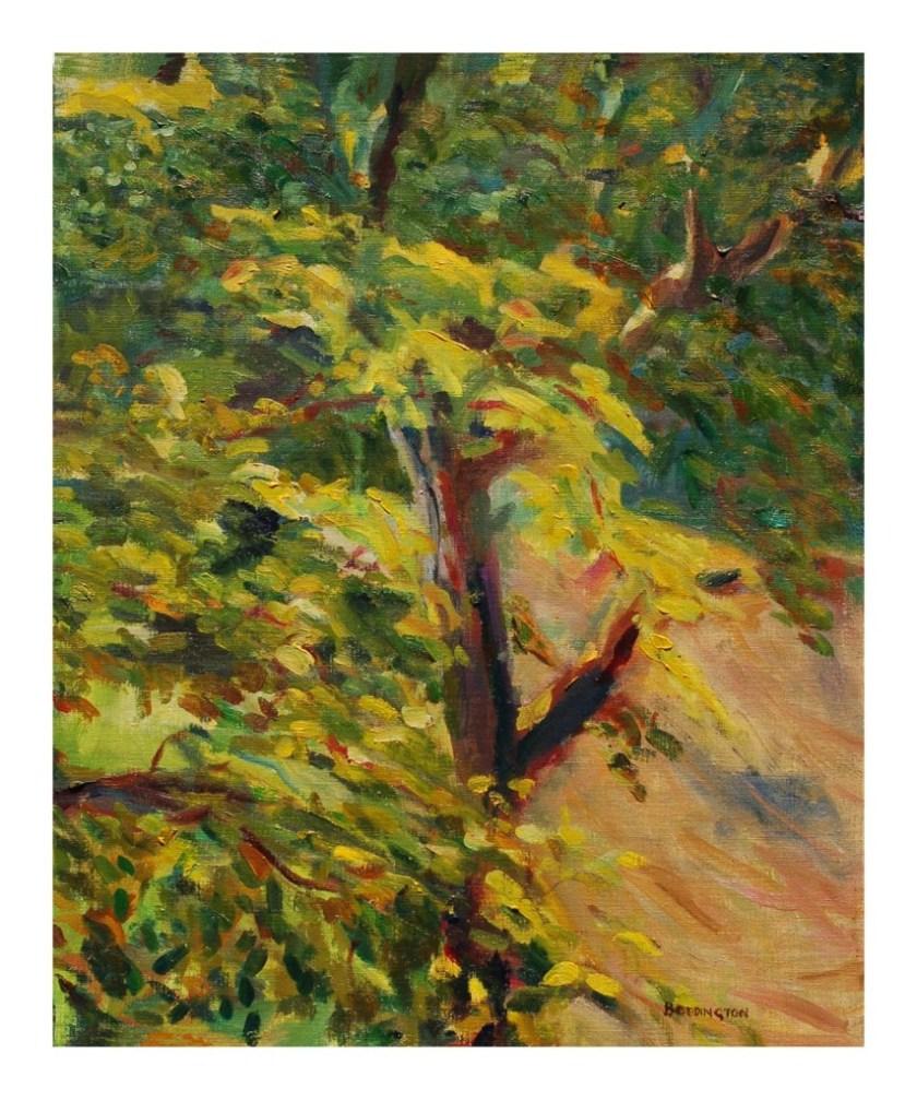 chris boddington-walnut tree