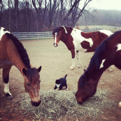 cricket and the ponies