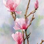 Pink Magnolias watercolour painting by Joe Cartwright