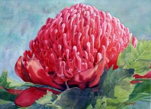 Red Waratah flower watercolor painting