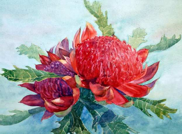 Red Waratahs with green background watercolor painting