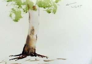 Gum tree adding light tone foliage watercolor