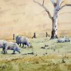 Grazing sheep on and Australian farm watercolor painting