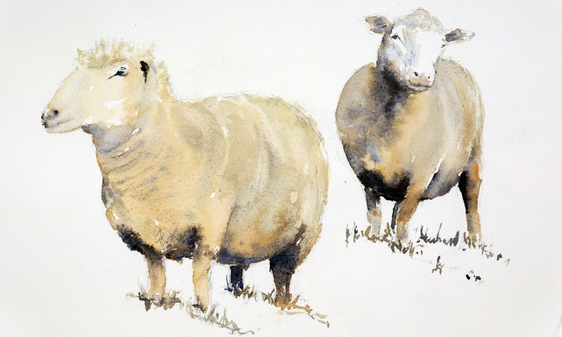Image result for sheep watercolor