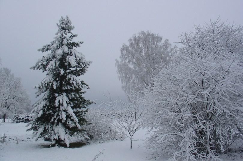 Tagaaed talvel
