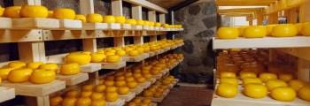 Valmib juustukelder, algab juustu tootmine