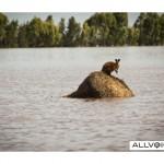 69583480-australia-flood