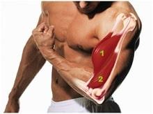 trening na biceps i triceps