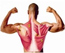 Trening na plecy, ćwiczenia na plecy | Atlas Ćwiczeń