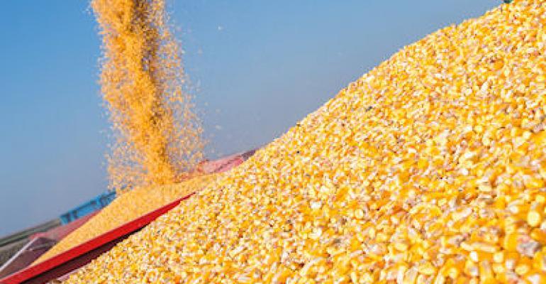 IGC increased forecast production of corn: Pakissan com