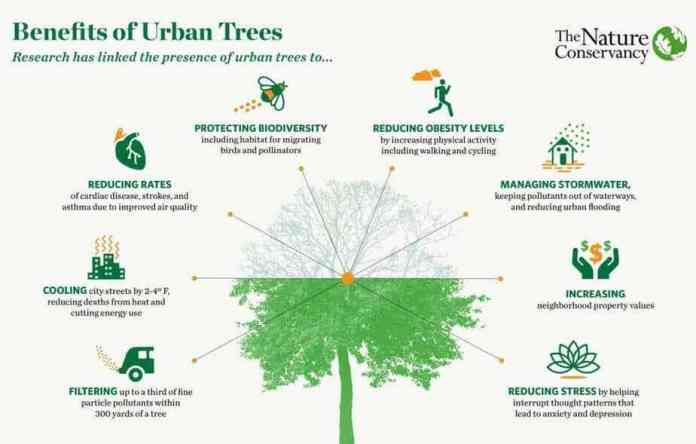 benefits of planting trees, uses of trees, filter the air, climate change