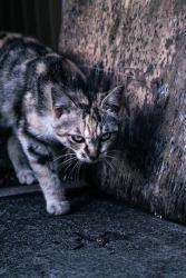 縄張りを意識する猫