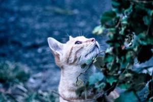 天気を気にする野良猫