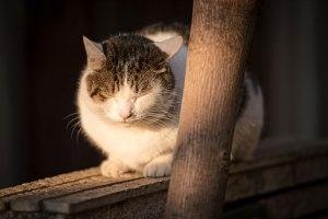 塀の上で丸くなる猫