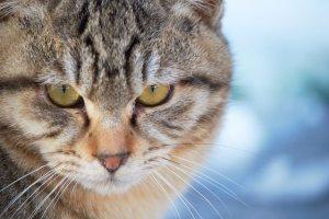 険しい表情の猫