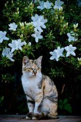 お花と猫ちゃん