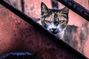 威嚇して縄張りを守る猫