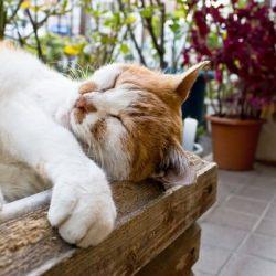 木箱の中で寝返り中の猫