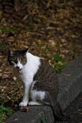 縁石に座る猫