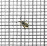 pal-insektenschutzgewebe-fiberglasgewebe