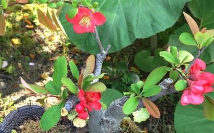 カフェ・アルバートの花